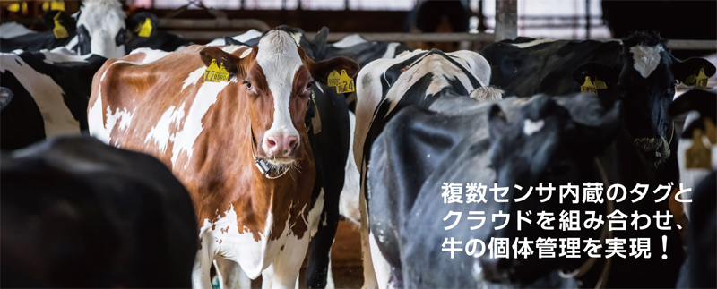 20190614daiebeef - ダイエー/直営農場に「牛の行動分析システム」管理業務効率化